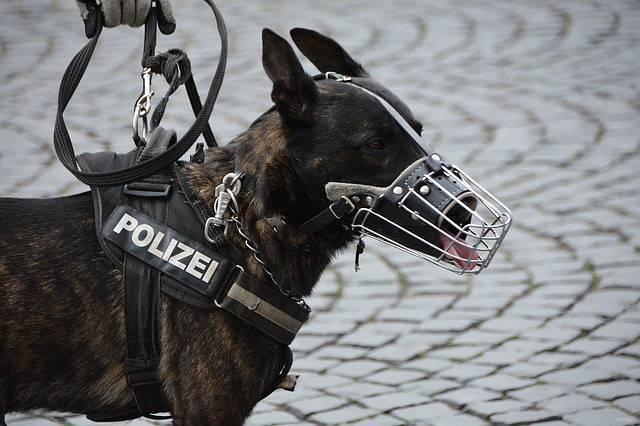 Hundestaffel bei der Polizei: So wirst du Hundeführer