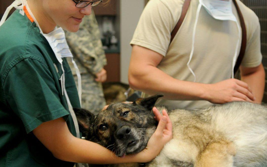 Tiermedizin/Veterinärmedizin- NC und Losverfahren
